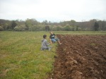 Wendy Sue's kids help plant potatoes
