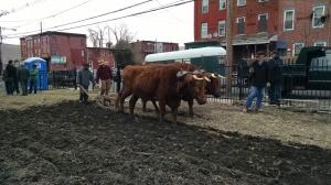 Plowing a community garden in Trenton